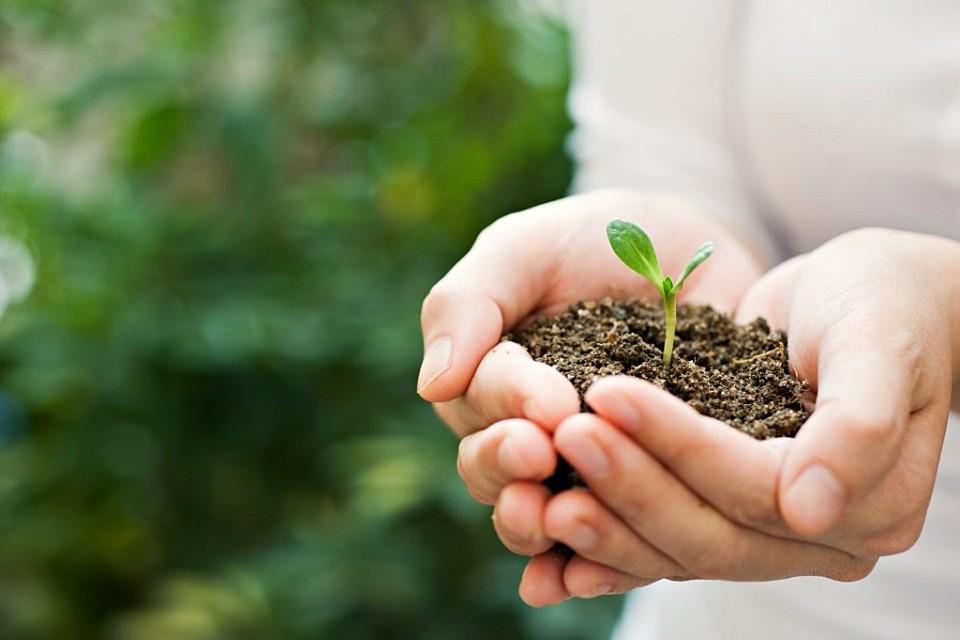 Armando Iachini - Dia Internacional del Medio Ambiente