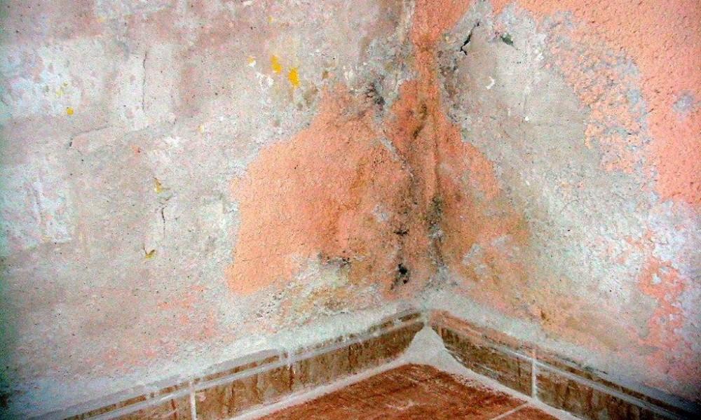 Armando Iachini Evitar humedad en paredes